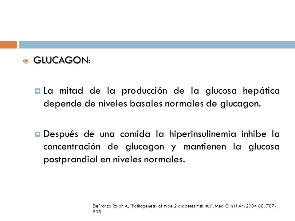 GLUCAGON GLUCAGON: La mitad de la producción de la glucosa hepática depende de niveles basales normales de glucagon. Después de una comida la hiperins