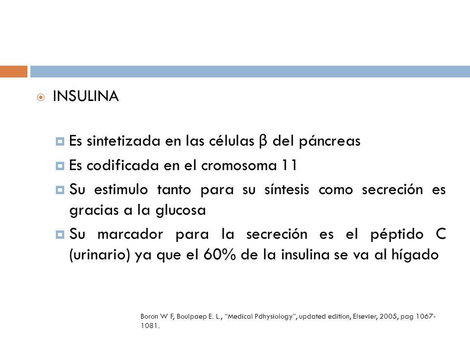 Insulina estimula LPL Quilomicrones liberan AGL Insulina inhibe la lipasa sensible a hormonas en adiposito Resistencia No se expresa la LPL La vida media de los quilomicrones se prolonga y hay hipertrigliceridema La lipasa sensible a hormonas no se inihibe y los AGL aumentan Eckel R H et al The metabolic syndrome Lancet 2005; 365: 1415-28