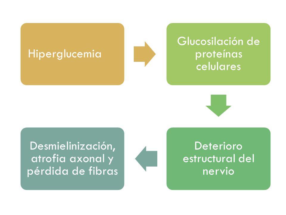 Hiperglucemia Glucosilación de proteínas celulares Deterioro estructural del nervio Desmielinización, atrofia axonal y pérdida de fibras
