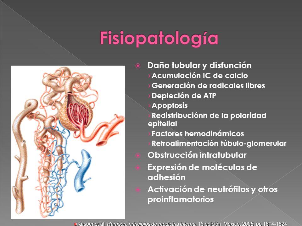 Daño tubular y disfunción Acumulación IC de calcio Generación de radicales libres Depleción de ATP Apoptosis Redistribuciónn de la polaridad epitelial