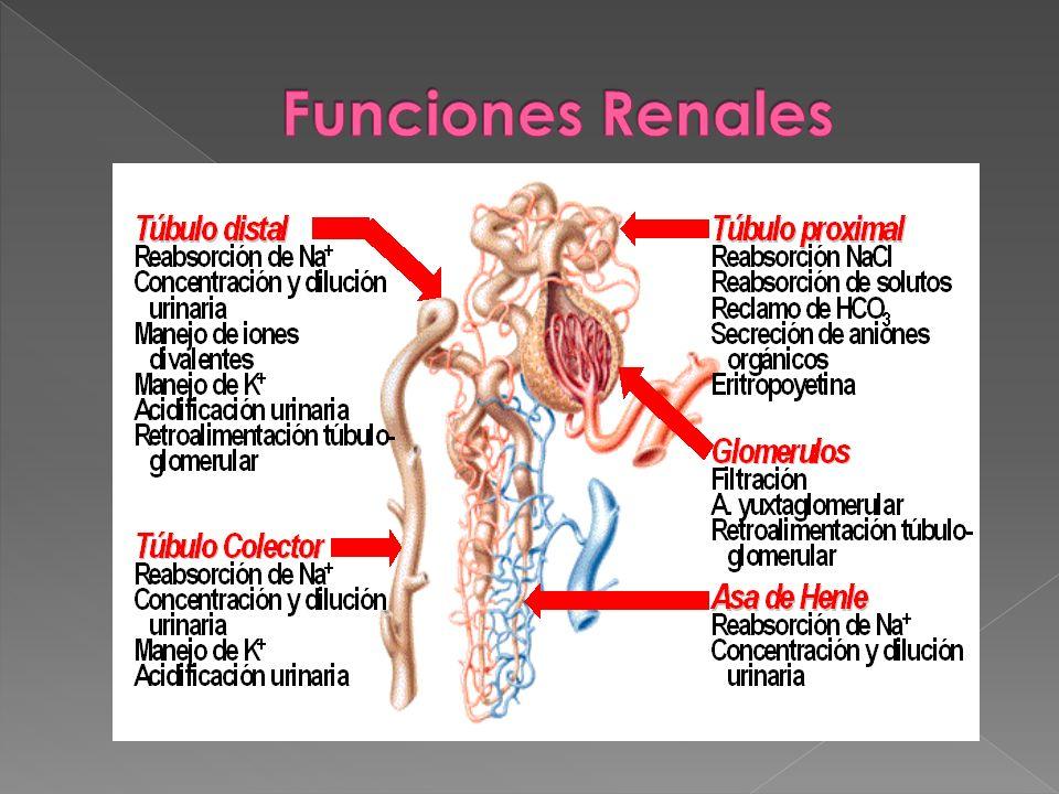 3.Glomerulonefritis Causas: Glomerulonefritis postestreptocóccica.