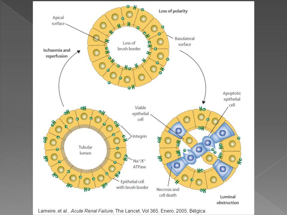Lameire, et al., Acute Renal Failure, The Lancet, Vol 365, Enero, 2005, Bélgica.