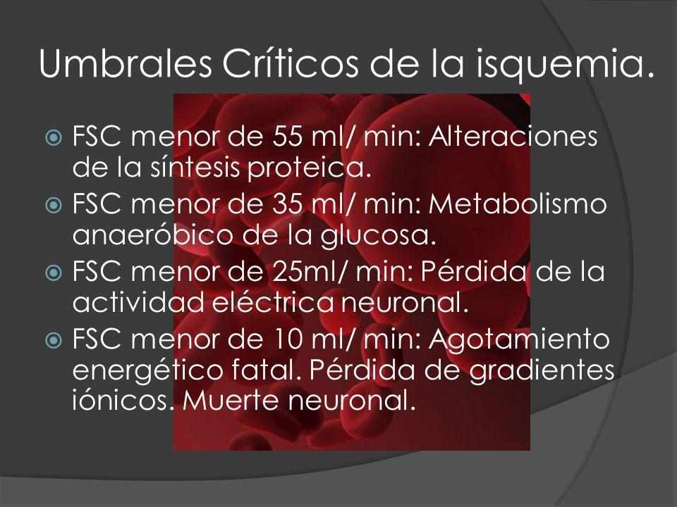 Umbrales Críticos de la isquemia. FSC menor de 55 ml/ min: Alteraciones de la síntesis proteica. FSC menor de 35 ml/ min: Metabolismo anaeróbico de la