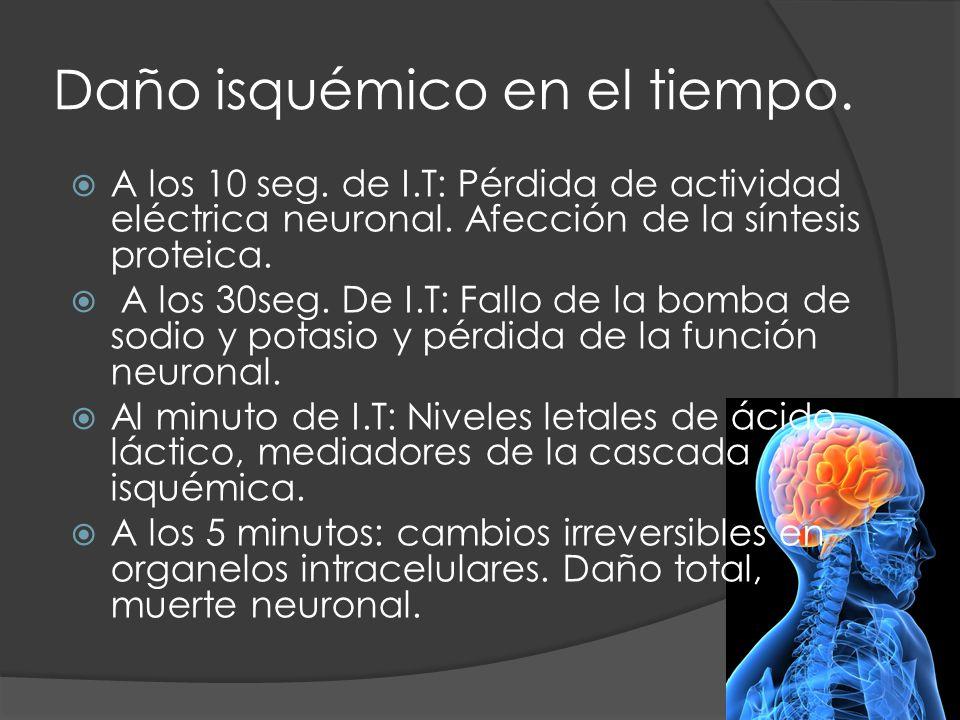 Daño isquémico en el tiempo. A los 10 seg. de I.T: Pérdida de actividad eléctrica neuronal. Afección de la síntesis proteica. A los 30seg. De I.T: Fal