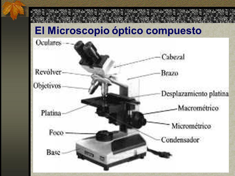 El Microscopio óptico compuesto