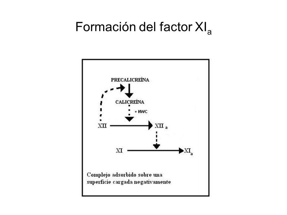 Formación del factor XI a