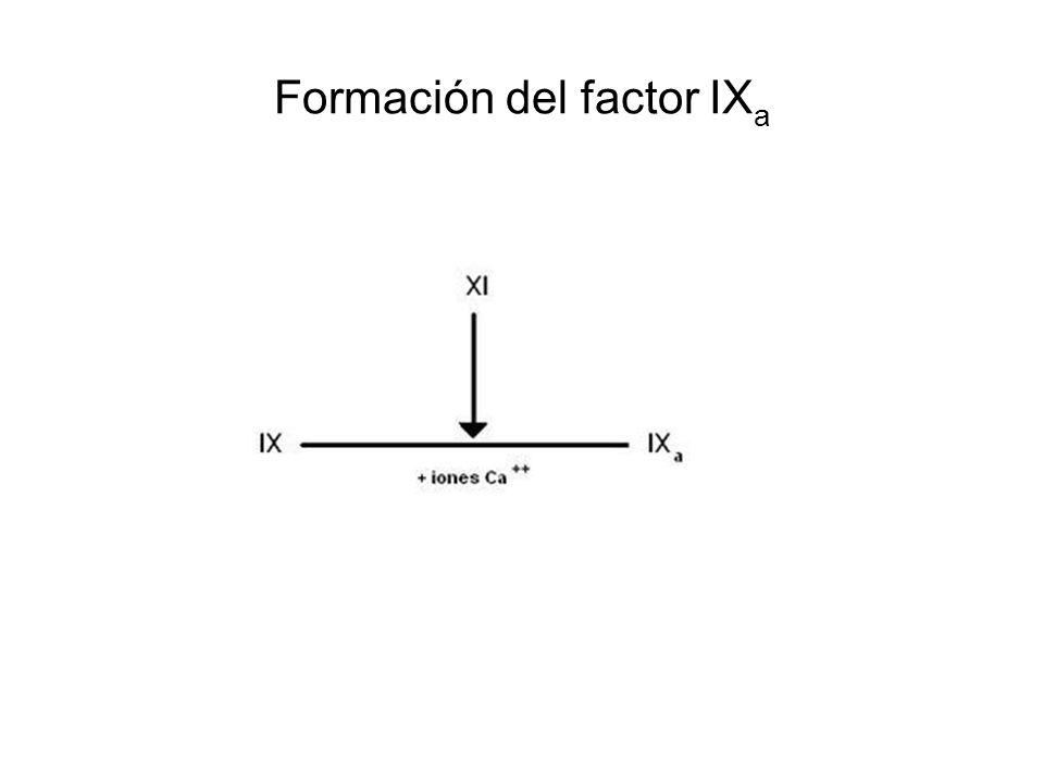 Formación del factor IX a