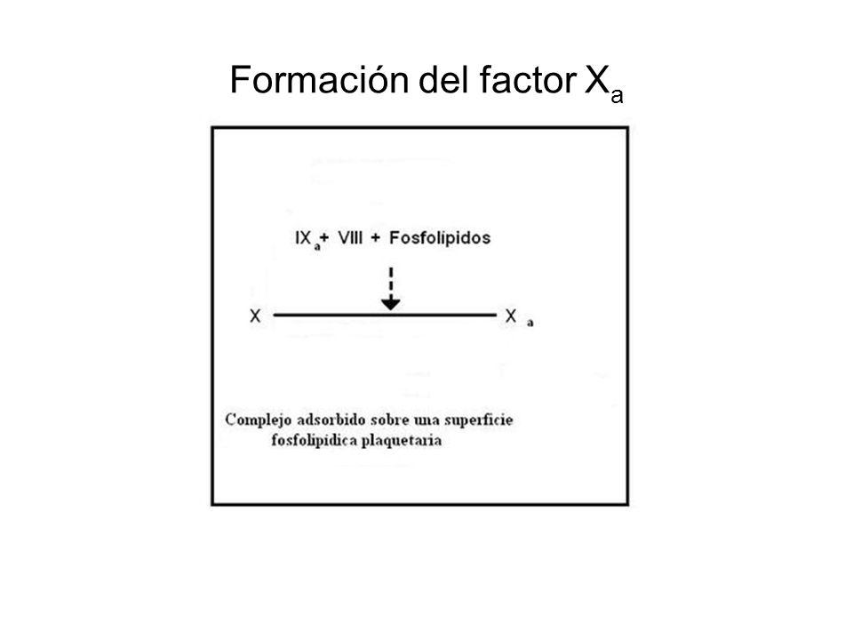 Formación del factor X a