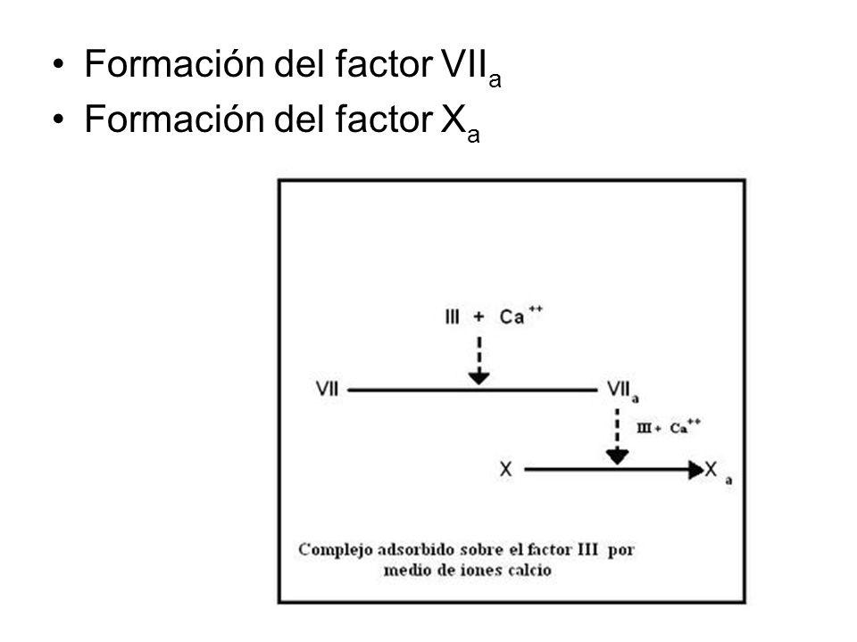 Formación del factor VII a Formación del factor X a