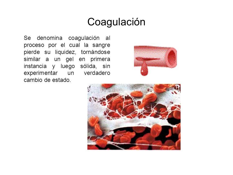 Coagulación Se denomina coagulación al proceso por el cual la sangre pierde su liquidez, tornándose similar a un gel en primera instancia y luego sóli