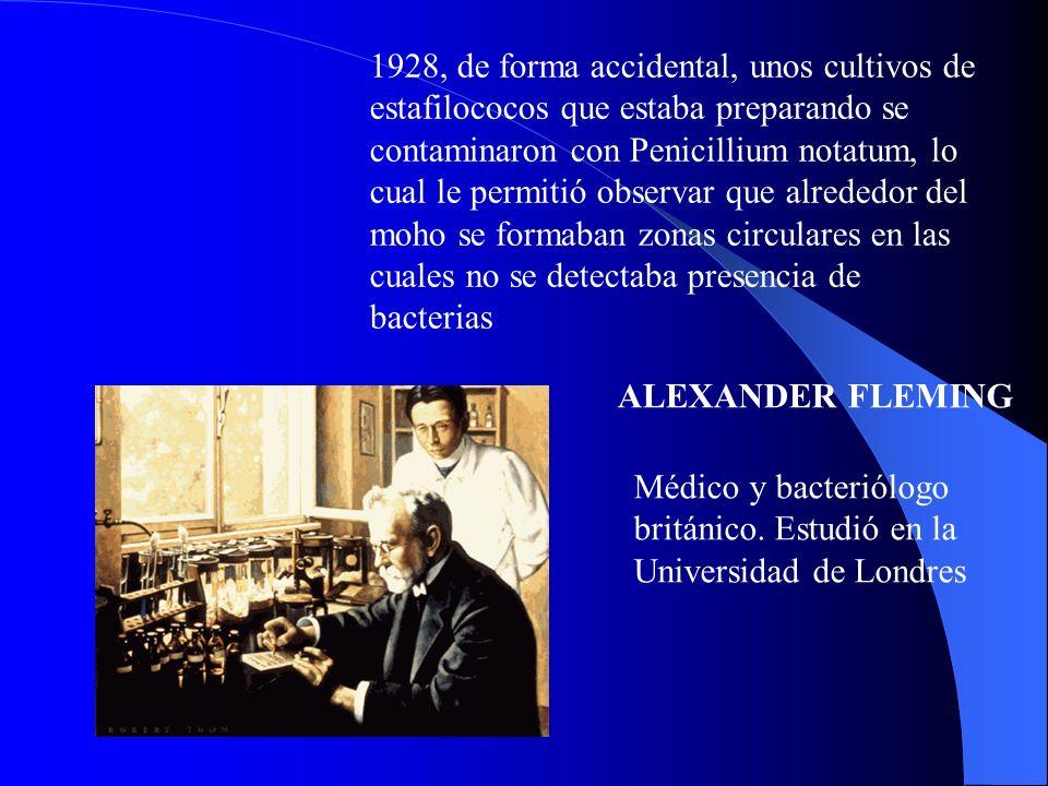 1928, de forma accidental, unos cultivos de estafilococos que estaba preparando se contaminaron con Penicillium notatum, lo cual le permitió observar