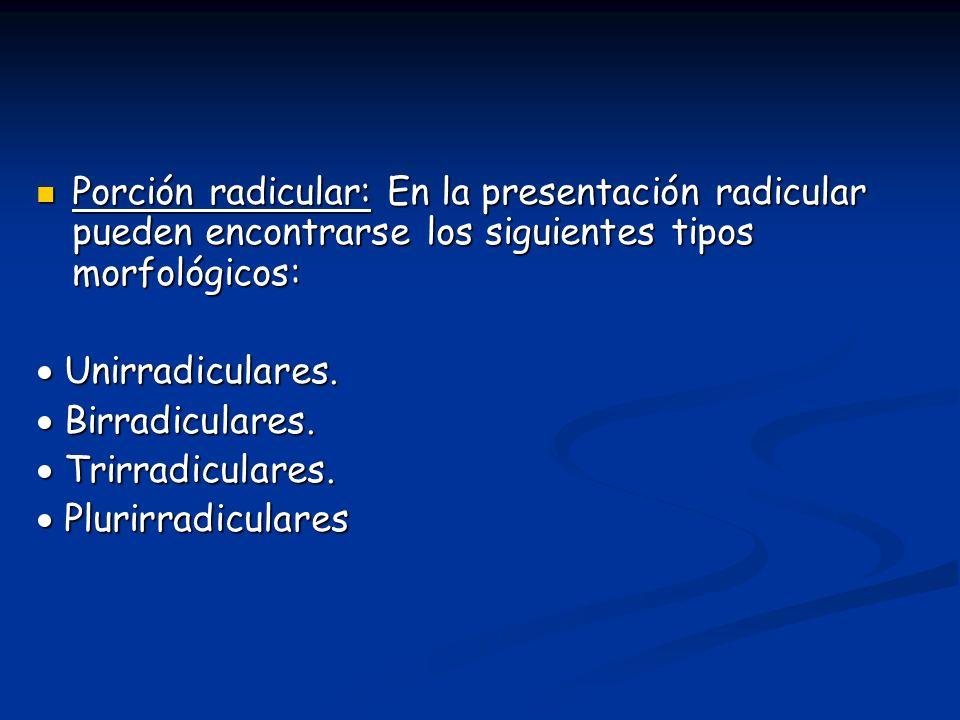 Porción radicular: En la presentación radicular pueden encontrarse los siguientes tipos morfológicos: Porción radicular: En la presentación radicular pueden encontrarse los siguientes tipos morfológicos: Unirradiculares.