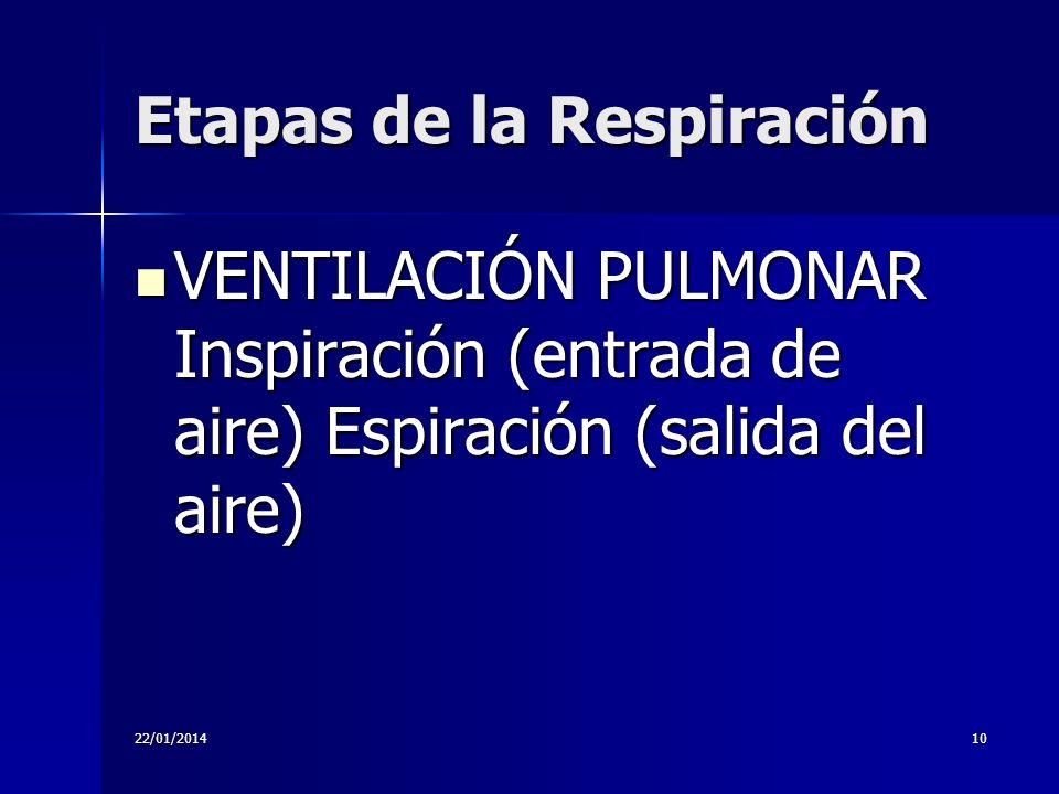 22/01/201410 Etapas de la Respiración VENTILACIÓN PULMONAR Inspiración (entrada de aire) Espiración (salida del aire) VENTILACIÓN PULMONAR Inspiración