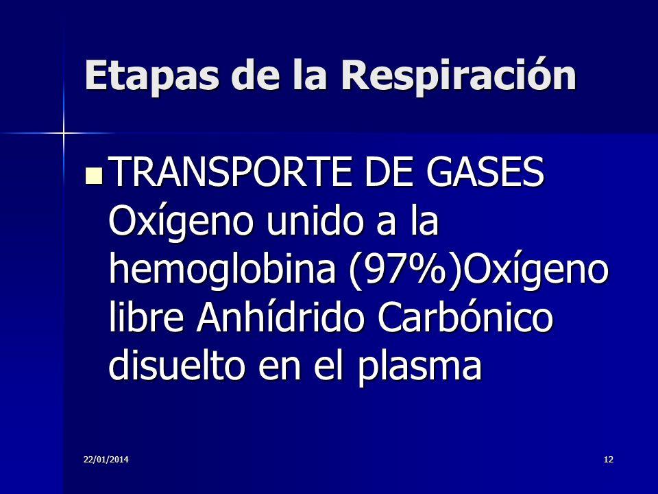 22/01/201412 Etapas de la Respiración TRANSPORTE DE GASES Oxígeno unido a la hemoglobina (97%)Oxígeno libre Anhídrido Carbónico disuelto en el plasma