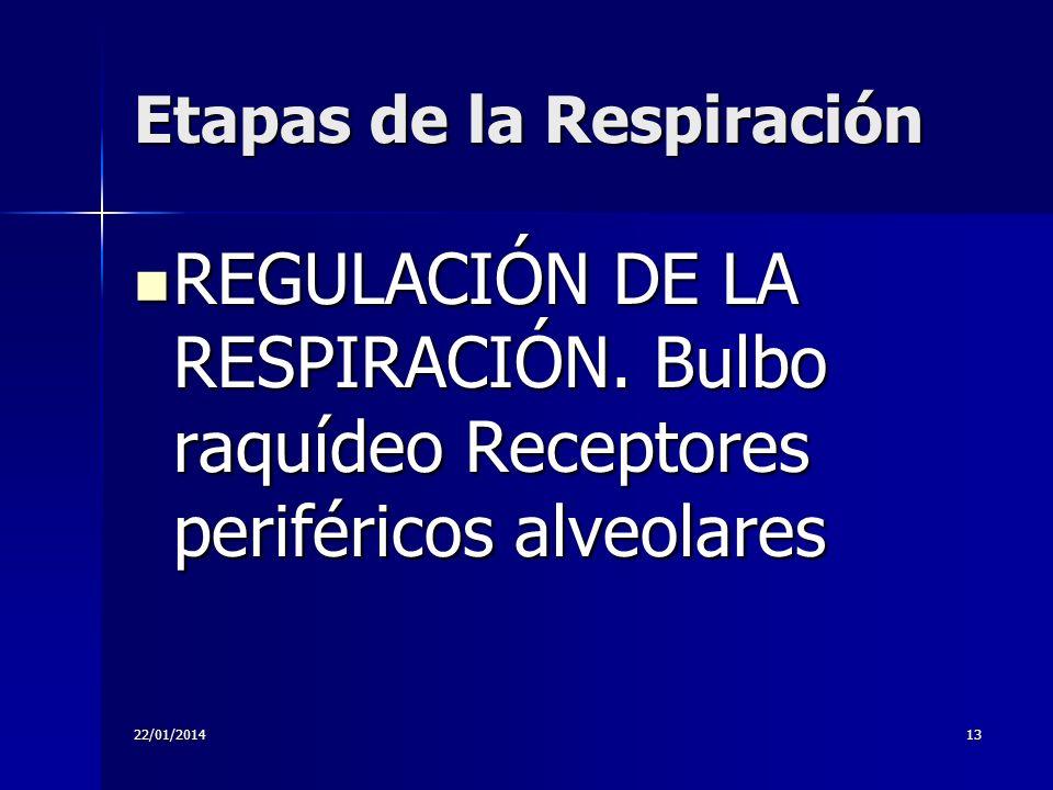 22/01/201413 Etapas de la Respiración REGULACIÓN DE LA RESPIRACIÓN. Bulbo raquídeo Receptores periféricos alveolares REGULACIÓN DE LA RESPIRACIÓN. Bul