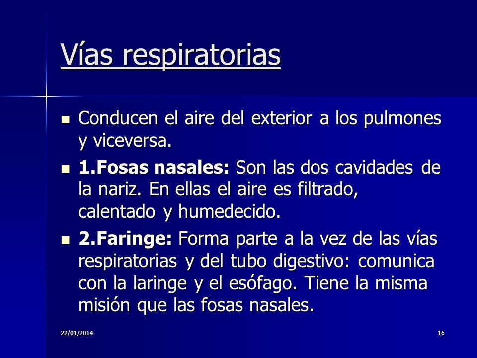 22/01/201416 Vías respiratorias Conducen el aire del exterior a los pulmones y viceversa. Conducen el aire del exterior a los pulmones y viceversa. 1.