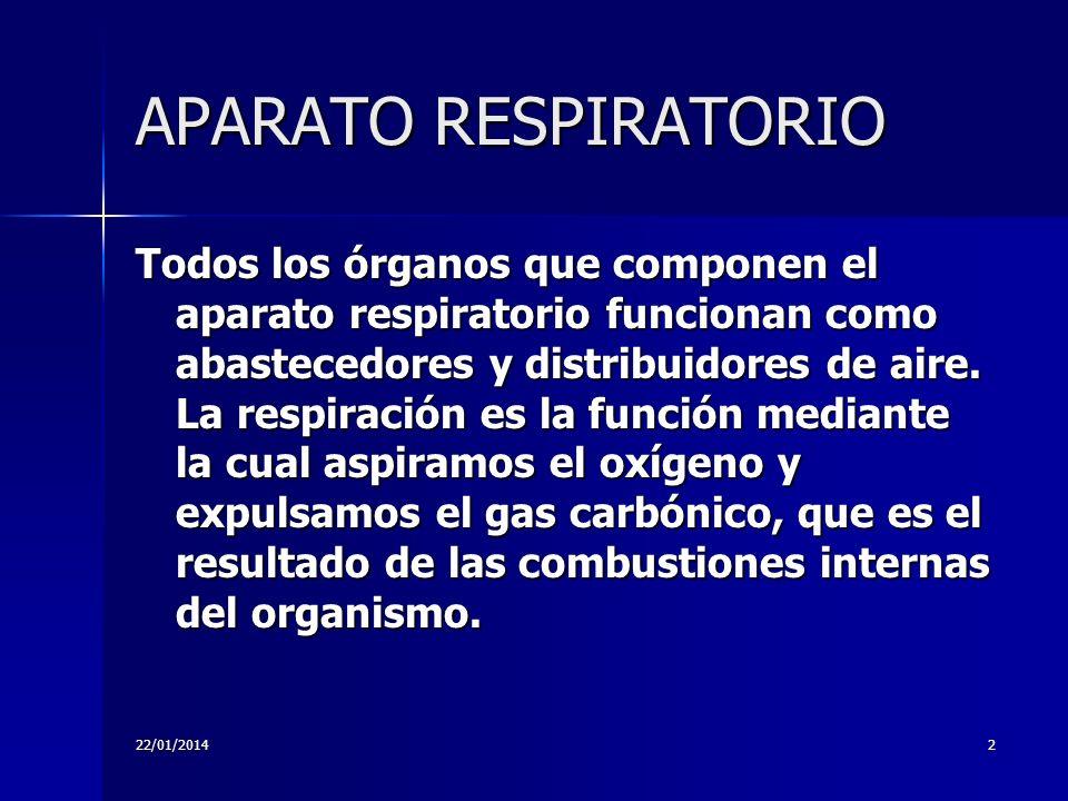 22/01/20142 APARATO RESPIRATORIO Todos los órganos que componen el aparato respiratorio funcionan como abastecedores y distribuidores de aire. La resp