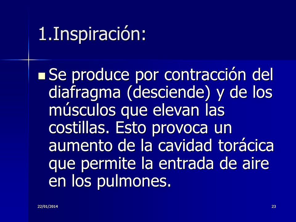 22/01/201423 1.Inspiración: Se produce por contracción del diafragma (desciende) y de los músculos que elevan las costillas. Esto provoca un aumento d