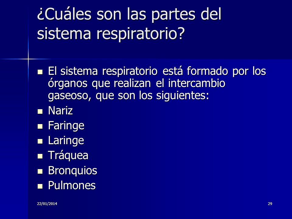 22/01/201429 ¿Cuáles son las partes del sistema respiratorio? El sistema respiratorio está formado por los órganos que realizan el intercambio gaseoso