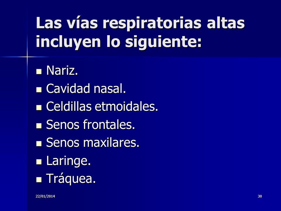 22/01/201430 Las vías respiratorias altas incluyen lo siguiente: Nariz. Nariz. Cavidad nasal. Cavidad nasal. Celdillas etmoidales. Celdillas etmoidale