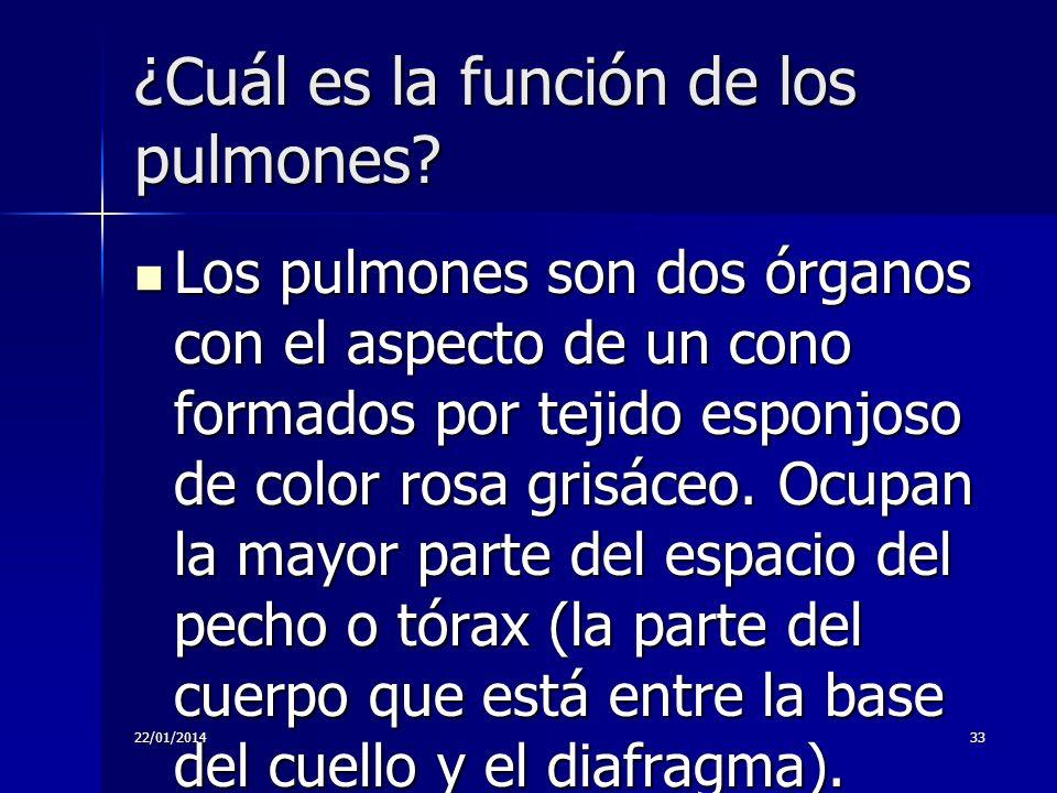 22/01/201433 ¿Cuál es la función de los pulmones? Los pulmones son dos órganos con el aspecto de un cono formados por tejido esponjoso de color rosa g