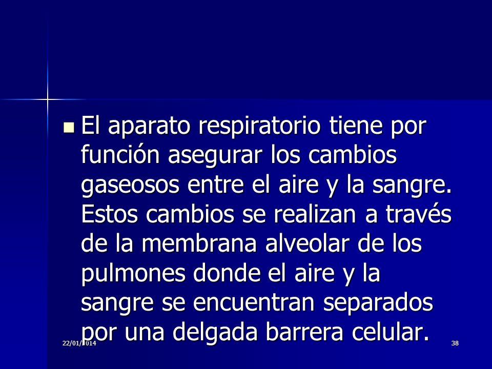 22/01/201438 El aparato respiratorio tiene por función asegurar los cambios gaseosos entre el aire y la sangre. Estos cambios se realizan a través de