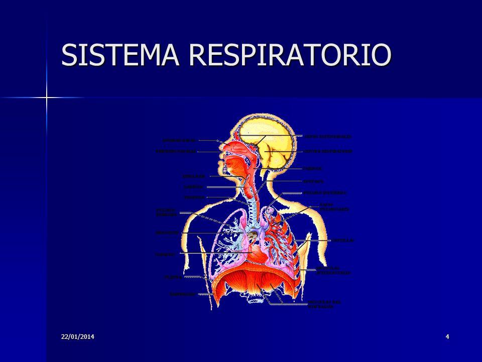 22/01/20144 SISTEMA RESPIRATORIO