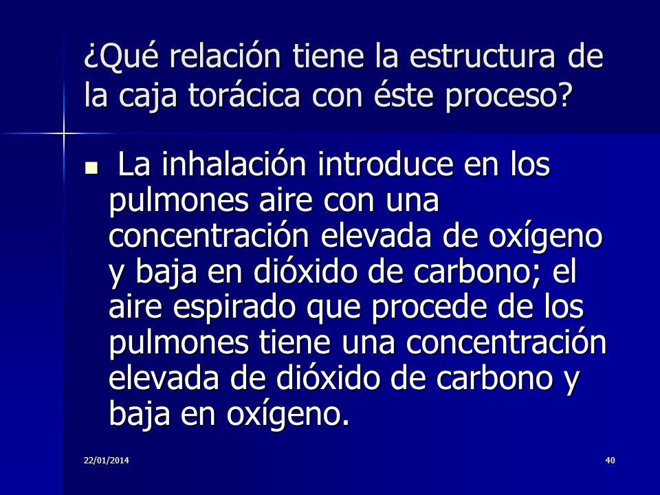 22/01/201440 ¿Qué relación tiene la estructura de la caja torácica con éste proceso? La inhalación introduce en los pulmones aire con una concentració