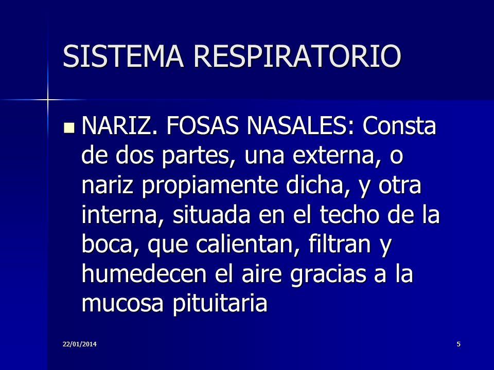 22/01/20145 SISTEMA RESPIRATORIO NARIZ. FOSAS NASALES: Consta de dos partes, una externa, o nariz propiamente dicha, y otra interna, situada en el tec