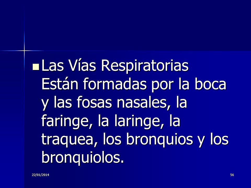 22/01/201456 Las Vías Respiratorias Están formadas por la boca y las fosas nasales, la faringe, la laringe, la traquea, los bronquios y los bronquiolo