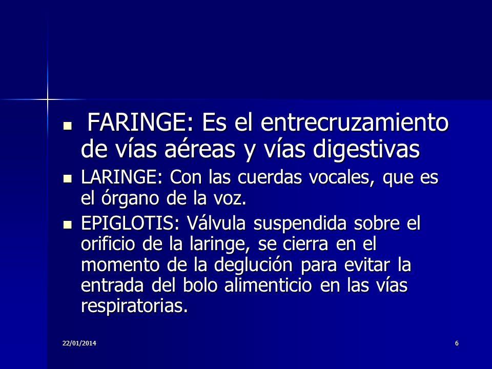 22/01/20146 FARINGE: Es el entrecruzamiento de vías aéreas y vías digestivas FARINGE: Es el entrecruzamiento de vías aéreas y vías digestivas LARINGE: