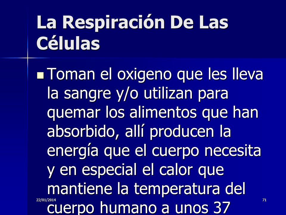 22/01/201471 La Respiración De Las Células Toman el oxigeno que les lleva la sangre y/o utilizan para quemar los alimentos que han absorbido, allí pro