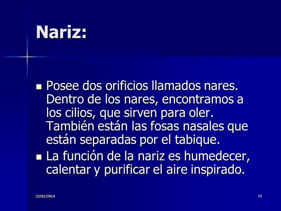 22/01/201472 Nariz: Posee dos orificios llamados nares. Dentro de los nares, encontramos a los cilios, que sirven para oler. También están las fosas n
