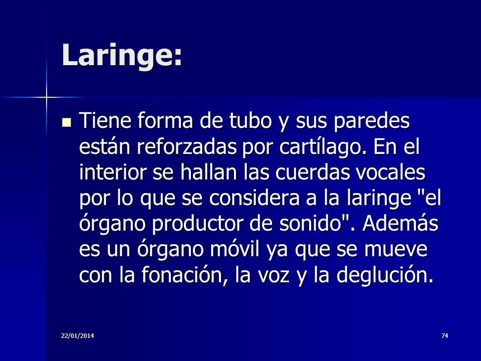 22/01/201474 Laringe: Tiene forma de tubo y sus paredes están reforzadas por cartílago. En el interior se hallan las cuerdas vocales por lo que se con