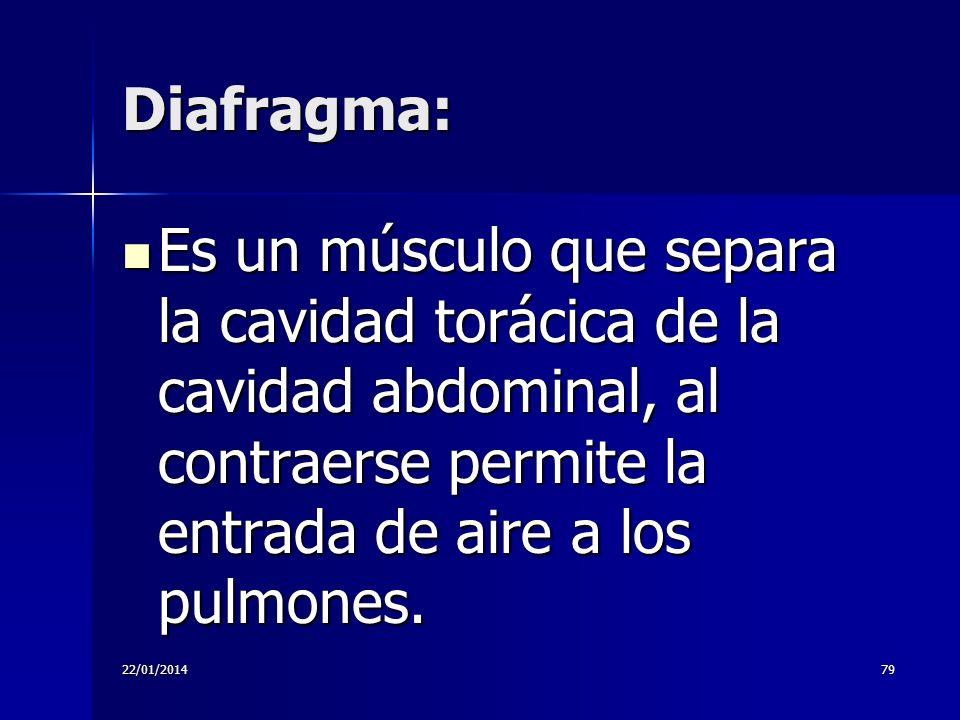 22/01/201479 Diafragma: Es un músculo que separa la cavidad torácica de la cavidad abdominal, al contraerse permite la entrada de aire a los pulmones.