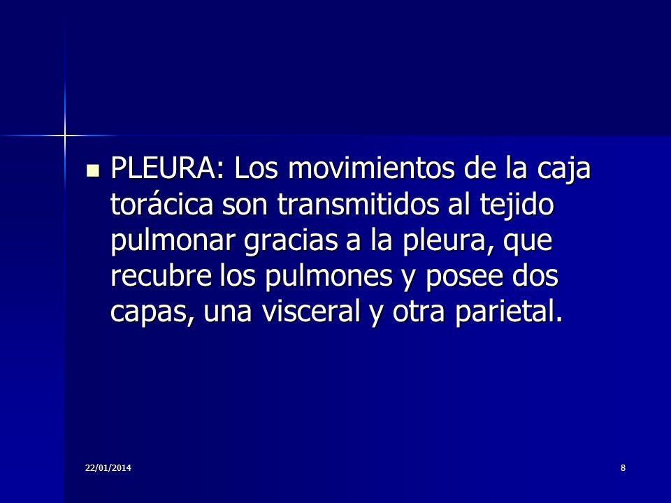 22/01/20148 PLEURA: Los movimientos de la caja torácica son transmitidos al tejido pulmonar gracias a la pleura, que recubre los pulmones y posee dos