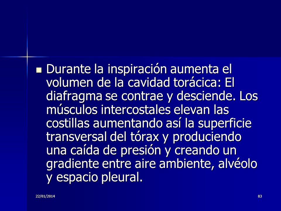 22/01/201483 Durante la inspiración aumenta el volumen de la cavidad torácica: El diafragma se contrae y desciende. Los músculos intercostales elevan