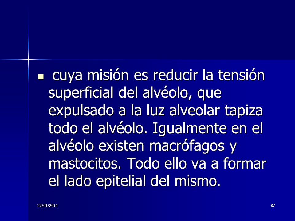 22/01/201487 cuya misión es reducir la tensión superficial del alvéolo, que expulsado a la luz alveolar tapiza todo el alvéolo. Igualmente en el alvéo