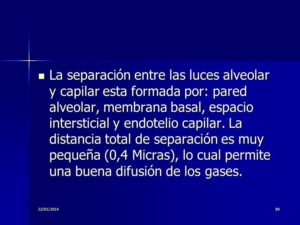 22/01/201489 La separación entre las luces alveolar y capilar esta formada por: pared alveolar, membrana basal, espacio intersticial y endotelio capil