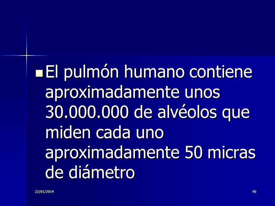 22/01/201490 El pulmón humano contiene aproximadamente unos 30.000.000 de alvéolos que miden cada uno aproximadamente 50 micras de diámetro El pulmón