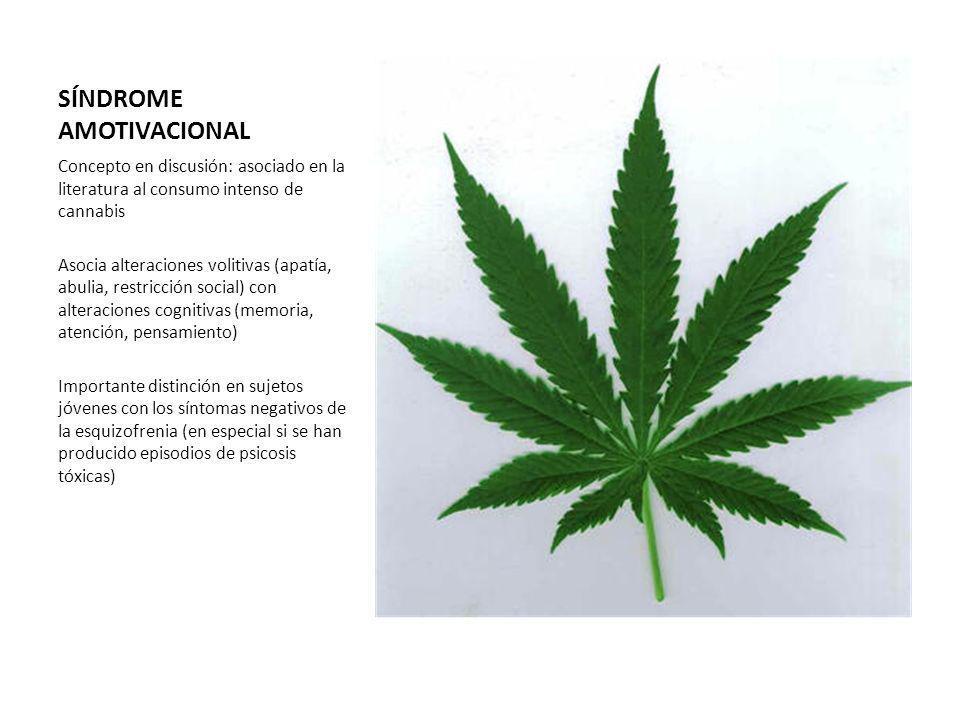 SÍNDROME AMOTIVACIONAL Concepto en discusión: asociado en la literatura al consumo intenso de cannabis Asocia alteraciones volitivas (apatía, abulia,