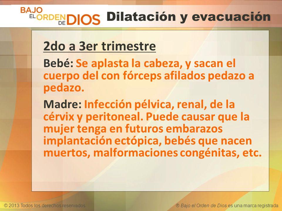 © 2013 Todos los derechos reservados ® Bajo el Orden de Dios es una marca registrada 2do a 3er trimestre Bebé: Se aplasta la cabeza, y sacan el cuerpo