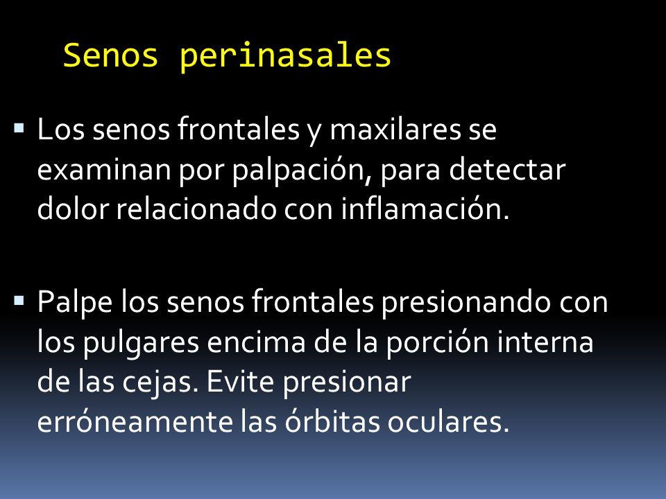 Senos perinasales Los senos frontales y maxilares se examinan por palpación, para detectar dolor relacionado con inflamación. Palpe los senos frontale