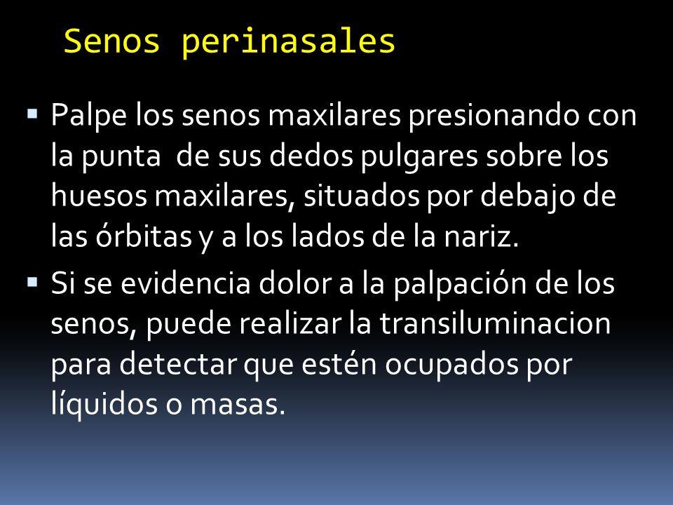 Senos perinasales Palpe los senos maxilares presionando con la punta de sus dedos pulgares sobre los huesos maxilares, situados por debajo de las órbi