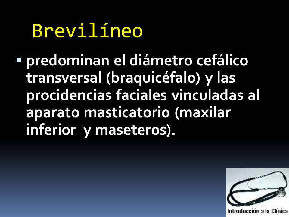 Brevilíneo predominan el diámetro cefálico transversal (braquicéfalo) y las procidencias faciales vinculadas al aparato masticatorio (maxilar inferior