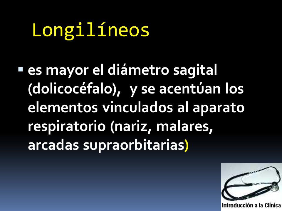 Longilíneos es mayor el diámetro sagital (dolicocéfalo), y se acentúan los elementos vinculados al aparato respiratorio (nariz, malares, arcadas supra