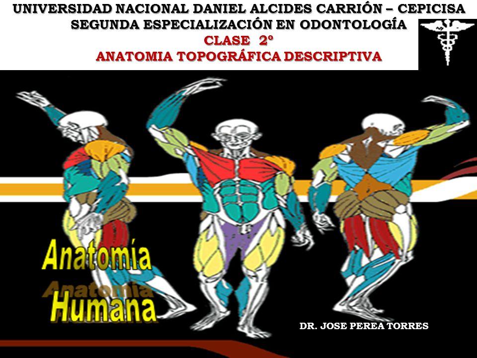UNIVERSIDAD NACIONAL DANIEL ALCIDES CARRIÓN – CEPICISA SEGUNDA ESPECIALIZACIÓN EN ODONTOLOGÍA CLASE 2º ANATOMIA TOPOGRÁFICA DESCRIPTIVA DR. JOSE PEREA