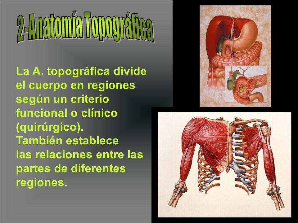 La A. topográfica divide el cuerpo en regiones según un criterio funcional o clínico (quirúrgico). También establece las relaciones entre las partes d
