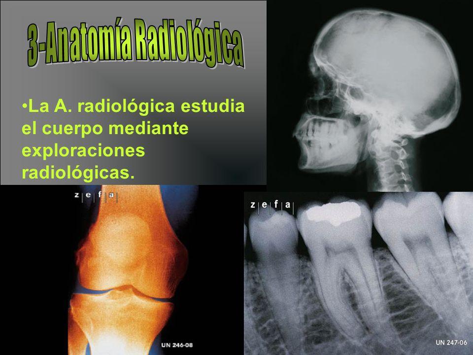 Flanco derecho: En donde se localizan el colon ascendente y asa delgadas intestinales.