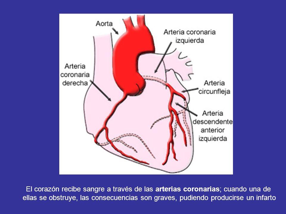 El corazón recibe sangre a través de las arterias coronarias; cuando una de ellas se obstruye, las consecuencias son graves, pudiendo producirse un in